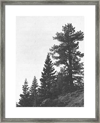Forest Ridge Framed Print by Frank Wilson