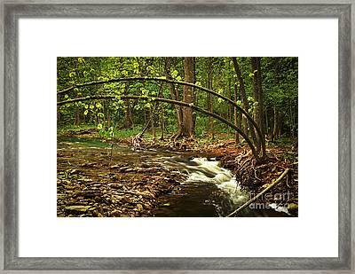 Forest River Framed Print by Elena Elisseeva
