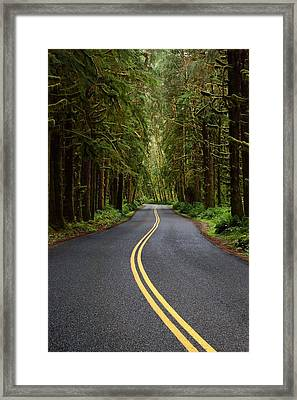 Forest Road Framed Print by David Andersen