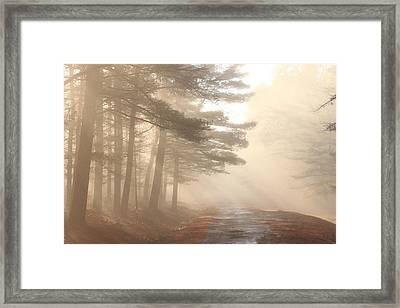 Forest Road Morning Fog Framed Print by John Burk