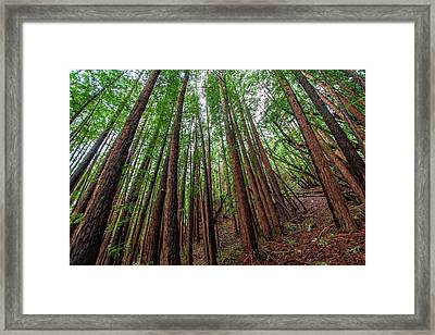 Forest Scene In Muir Woods State Park Framed Print by James White