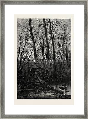 Forest Scene In Spring Framed Print by English School