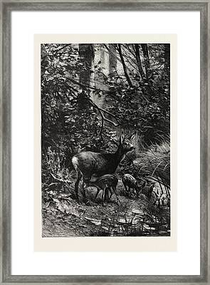 Forest Scene In Summer Framed Print by English School