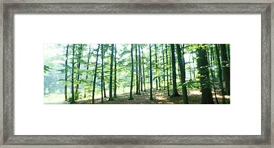 Forest Scene With Fog, Odenwald Framed Print by Panoramic Images