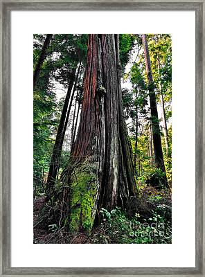 Forest Scenery Framed Print by Terry Elniski
