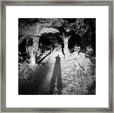 Forest Shadow Framed Print by Les Cunliffe