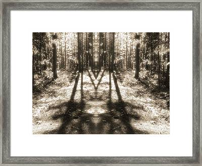 Forest Shadows Framed Print by Dan Sproul