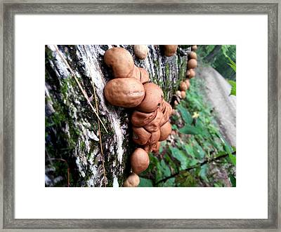 Forest Shrooms Framed Print by Lon Casler Bixby