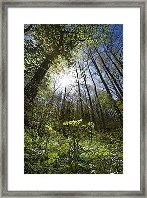 Forest Star Framed Print by Debra and Dave Vanderlaan