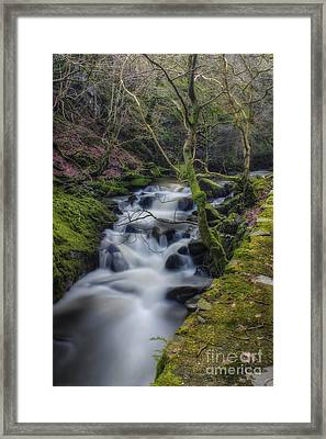 Forest Stream Framed Print by Ian Mitchell