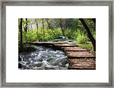 Forest Stream Scenery Framed Print
