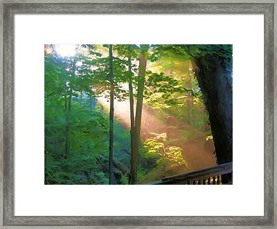 Forest Sunbeam Framed Print