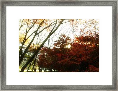 Forest Sunlight Framed Print by Les Cunliffe