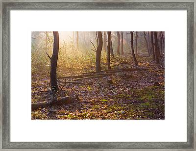 Forest Sunlight Framed Print by Semmick Photo