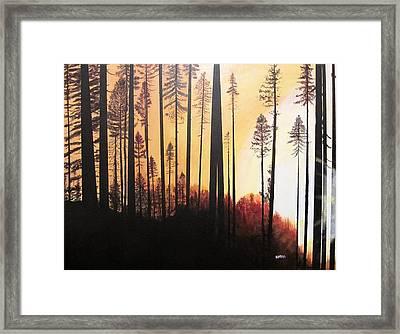 Forest Sunrise Framed Print