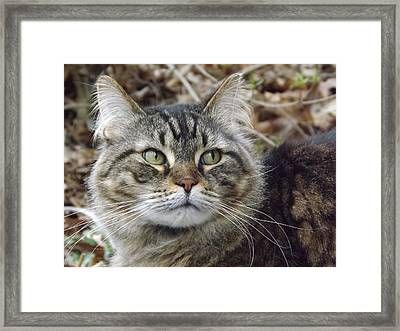 Forest The Cat Framed Print by Gerald Strine