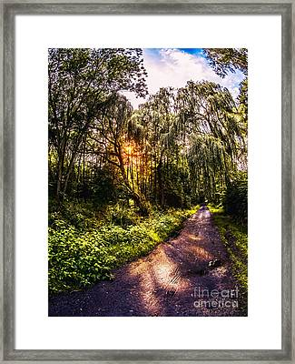 Forest Track Framed Print by Daniel Heine