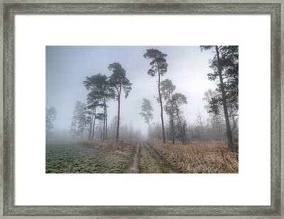 Forest Track In Mist Framed Print by EXparte SE