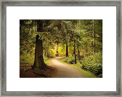 Forest Trail Framed Print by Brian Chase