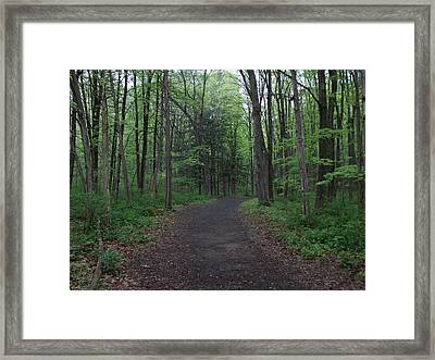 Forest Trail Framed Print by Catherine Gagne