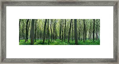 Forest Trail Chateau-thierry France Framed Print by Panoramic Images