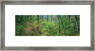 Forest, Trail Of Tears, Shawnee Framed Print by Panoramic Images