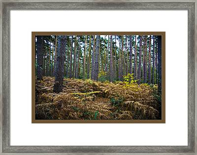 Framed Print featuring the photograph Forest Trees by Maj Seda