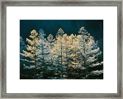 Forest Trees With Sunlight At Sunrise Framed Print by Panoramic Images