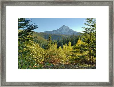 Forest View Framed Print by Arthur Fix