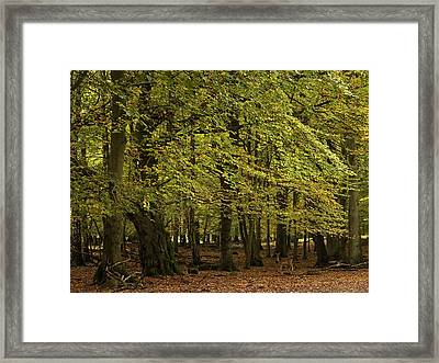 Framed Print featuring the photograph Forest Visitor by Inge Riis McDonald