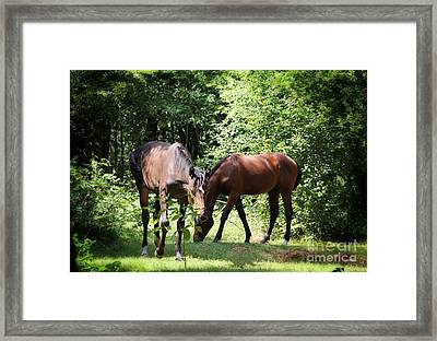 Forest Visitors Framed Print by Jackie Mestrom