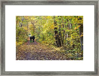 Forest Walk Framed Print by Kennerth and Birgitta Kullman