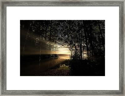 Forest Walkway Framed Print