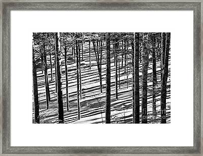 Forest's Shadows Framed Print