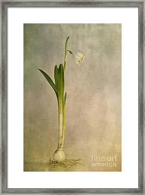 Foretaste Of Spring Framed Print