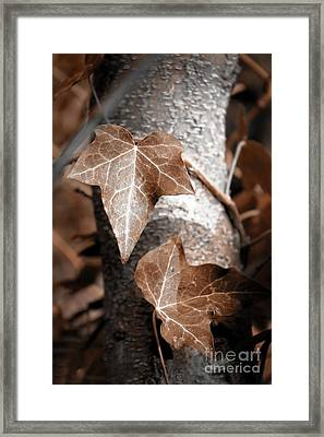 Framed Print featuring the photograph Forever Entwined by Ellen Cotton