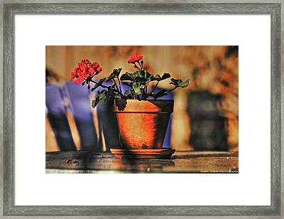 Forever Flower Framed Print by Kandy Hurley