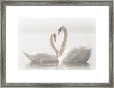 Forever Framed Print by Monika Schwager