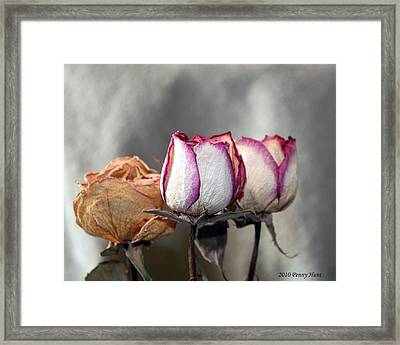 Framed Print featuring the photograph Forever Roses by Penny Hunt