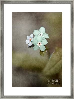 Forget Me Not 03 - S07bt07 Framed Print