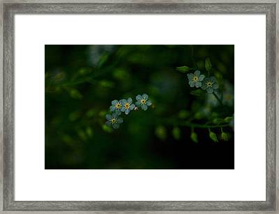 Forget  Me Not 4 Framed Print