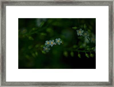 Forget  Me Not 4 Framed Print by Simone Ochrym