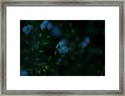 Forget Me Not 5 Framed Print