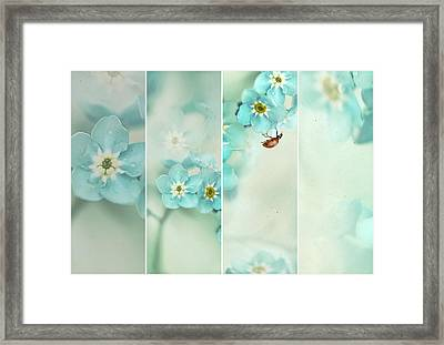 Forget Me Not..... Framed Print