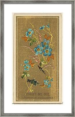 Forget-me-not Myosotis Palustris Framed Print