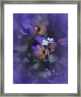 Forget Me Not Framed Print by Richard Cummings