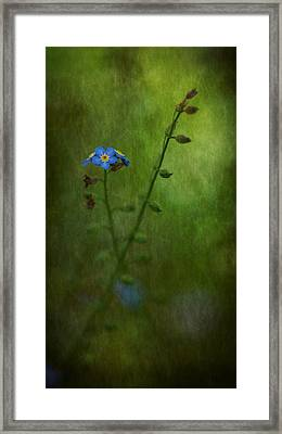 Forget Me Not Light Space Time Botanicals Art Exhibition 2014 Special Merit Award Framed Print