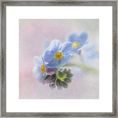 Forget Me Not Square Framed Print