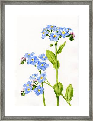 Forget-me-nots On White Framed Print by Sharon Freeman