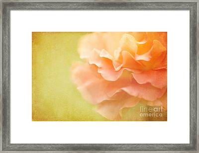 Forgiveness Framed Print by Beve Brown-Clark Photography